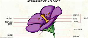 Flower  (Visual Dictionary)