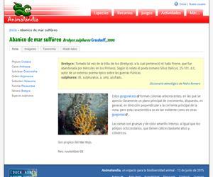 Abanico de mar sulfúreo (Brebyce sulphurea)