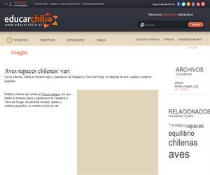 Aves rapaces chilenas: vari (Educarchile)