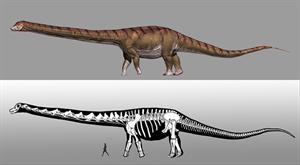 El dinosaurio más grande del mundo ya tiene nombre (SINC)