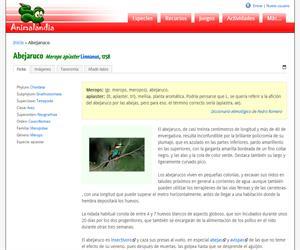 Abejaruco (Merops apiaster )