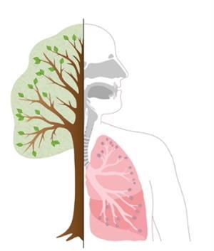 La respiración: Los alvéolos de nuestros pulmones. Experimento para niños de 8 a 12 años