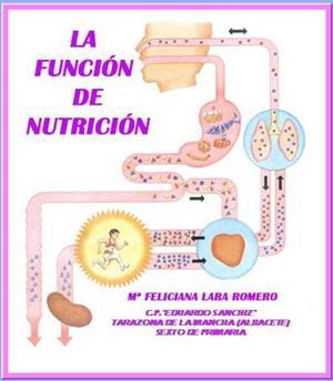 ¿Qué es la Función de Nutrición?