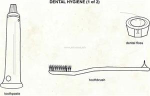 Dental hygiene  (Visual Dictionary)