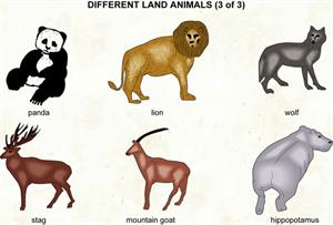 Animals  (Visual Dictionary)