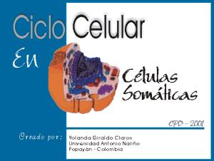 Ciclo celular en células somáticas