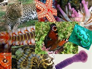 Características de los animales invertebrados (Animalandia)
