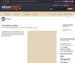 Golondrina chilena (Educarchile)