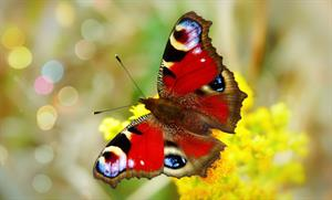 """Las mariposas"", texto explicativo"
