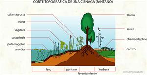 Pantano (Diccionario visual)