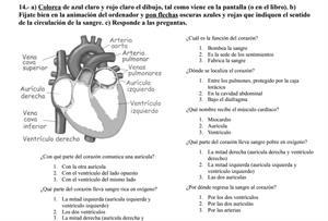 Aparatos circulatorios y excretor (actividades pdf)
