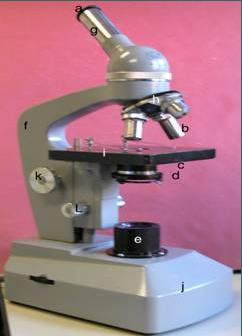 Prácticas de Laboratorio Microorganismos
