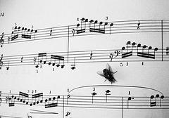 Canciones con lengua
