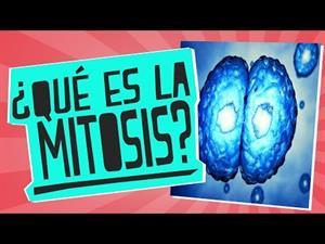 Qué es la mitosis?