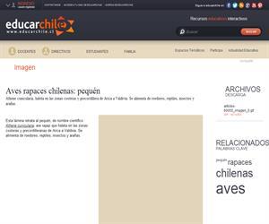 Aves rapaces chilenas: pequén (Educarchile)
