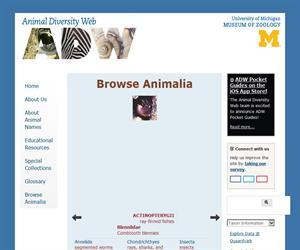 Animal Diversity Web (ADW), miles de especies animales a tu alcance