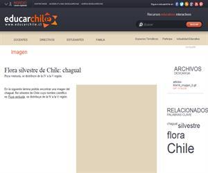 Flora silvestre de Chile: chagual (Educarchile)