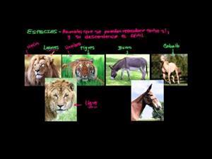 Especies (Khan Academy Español)
