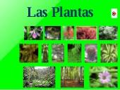 Unidad didáctica: Las Plantas