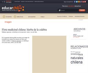 Flora medicinal chilena: hierba de la culebra (Educarchile)