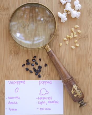 Popcorn Pumice: Exploring Different Rock Densities