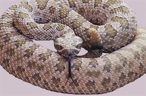 La serpiente cascabel (estudiantes.info)