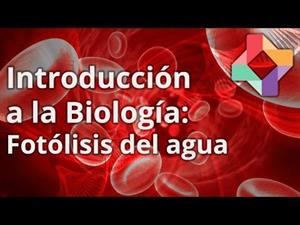 Aclaración Fotosíntesis: fotólisis del H2O