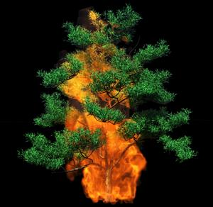 La domesticación del fuego en la Edad de piedra. Parte I