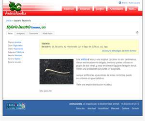 Stylaria lacustris (Stylaria lacustris)