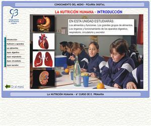 El cuerpo humano. Alimentación, respiración y circulación – Conocimiento del medio – 3º Ciclo de E. Primaria – Unidad didáctica.