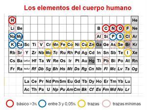 La tabla periódica de los elementos en un solo alimento. Investigación y Ciencia