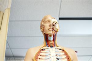 La organización del cuerpo humano