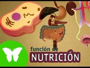 La función de nutrición (Eduteca)