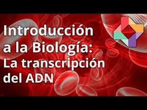 El proceso de transcripción al ARN