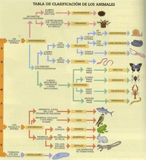 Clasificación de los seres vivos (unidad didáctica)