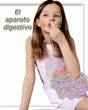 El aparato digestivo, una unidad didáctica para Primaria y Secundaria