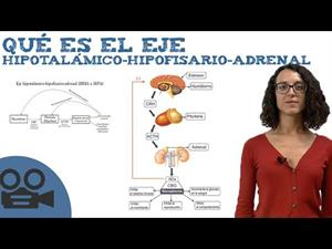 Qué es el Eje hipotalámico-hipofisario-adrenal