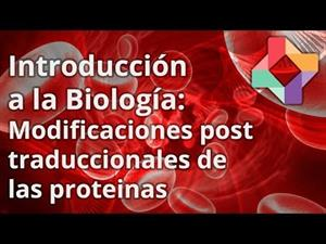 Modificaciones post-traduccionales de las proteínas (educatina.com)
