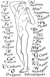 Composición química del cuerpo humano
