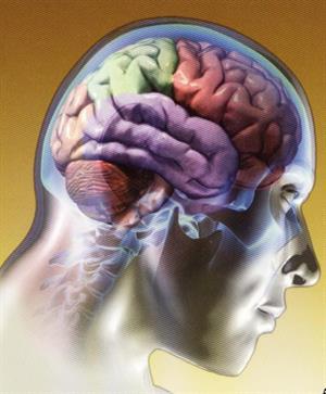 Propuesta de webquest sobre el cerebro humano
