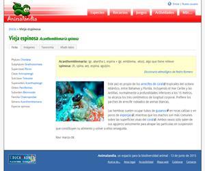 Vieja espinosa (Acanthemblemaria spinosa)