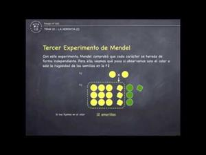 Le herencia :: Mendel
