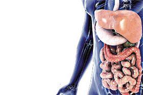 Hígado, vesícula biliar y páncreas: Anexos digestivos (Icarito.cl)