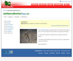 Scytaliopsis djiboutiensis (Scytaliopsis djiboutiensis)