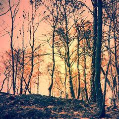 Bosques que arden