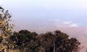Fray Jorge, parque nacional de Chile (profesorenlinea.cl)