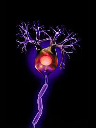 Edible Neuron Diagram