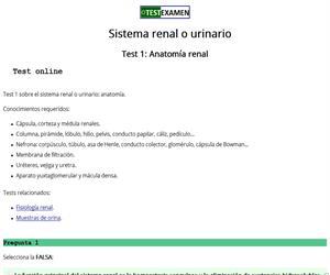 Anatomía renal (test)