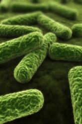 Microscopic Life is Everywhere