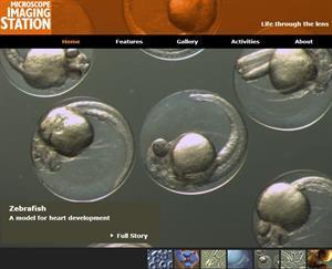 Microscope Imaging Station: el mundo microscópico en alta resolución